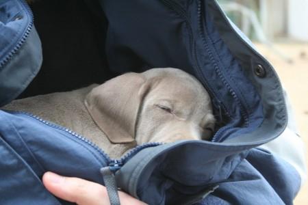 Me estoy quedando dormida...