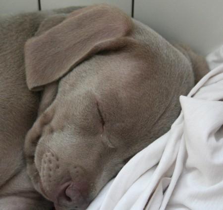 Pasa de la excitación total al sueño más profundo en un abrir y cerrar de ojos