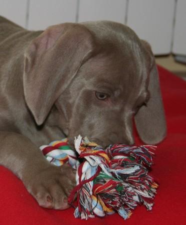 Me encanta el nudo de cuerda!