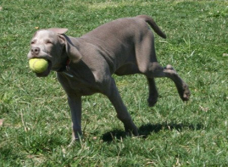 Le encanta jugar a traernos la pelota