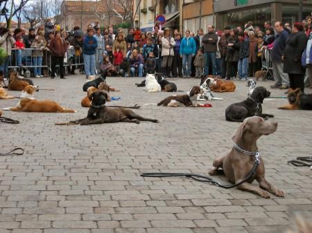 Ese día había mucha gente, ruidos, perros, caballos,...