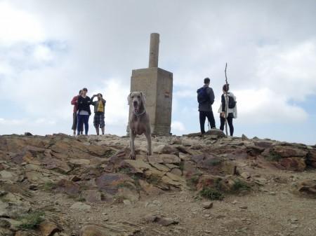 Grace en lo alte del Turó de l'Home (Montseny)
